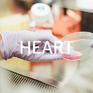 Download Heart Drug Guide
